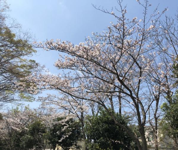 久里浜・神明公園