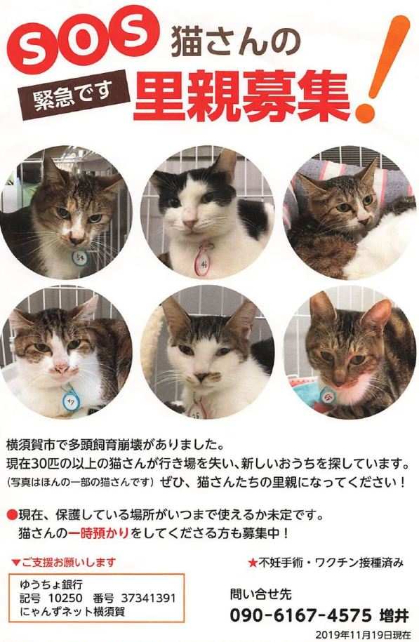 緊急でたくさんの猫たちの里親さんを募集しています